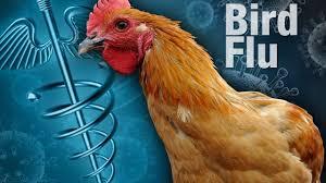 bird flue