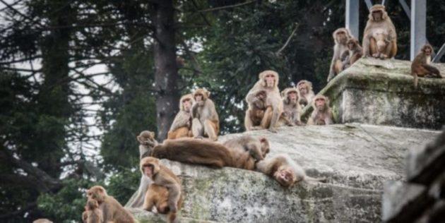 monkey-625x405
